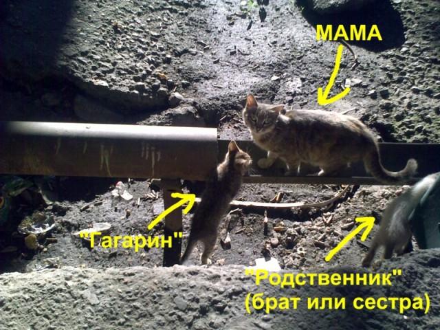 "Семья ""Гагариных"""