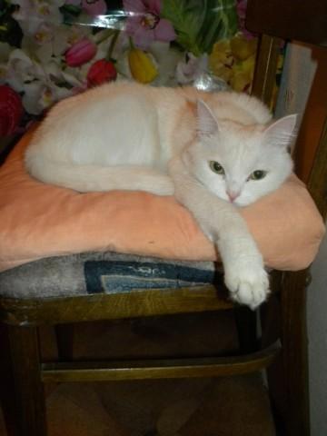 Наша кошка Аврора